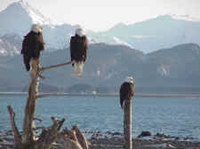 picture_eagles